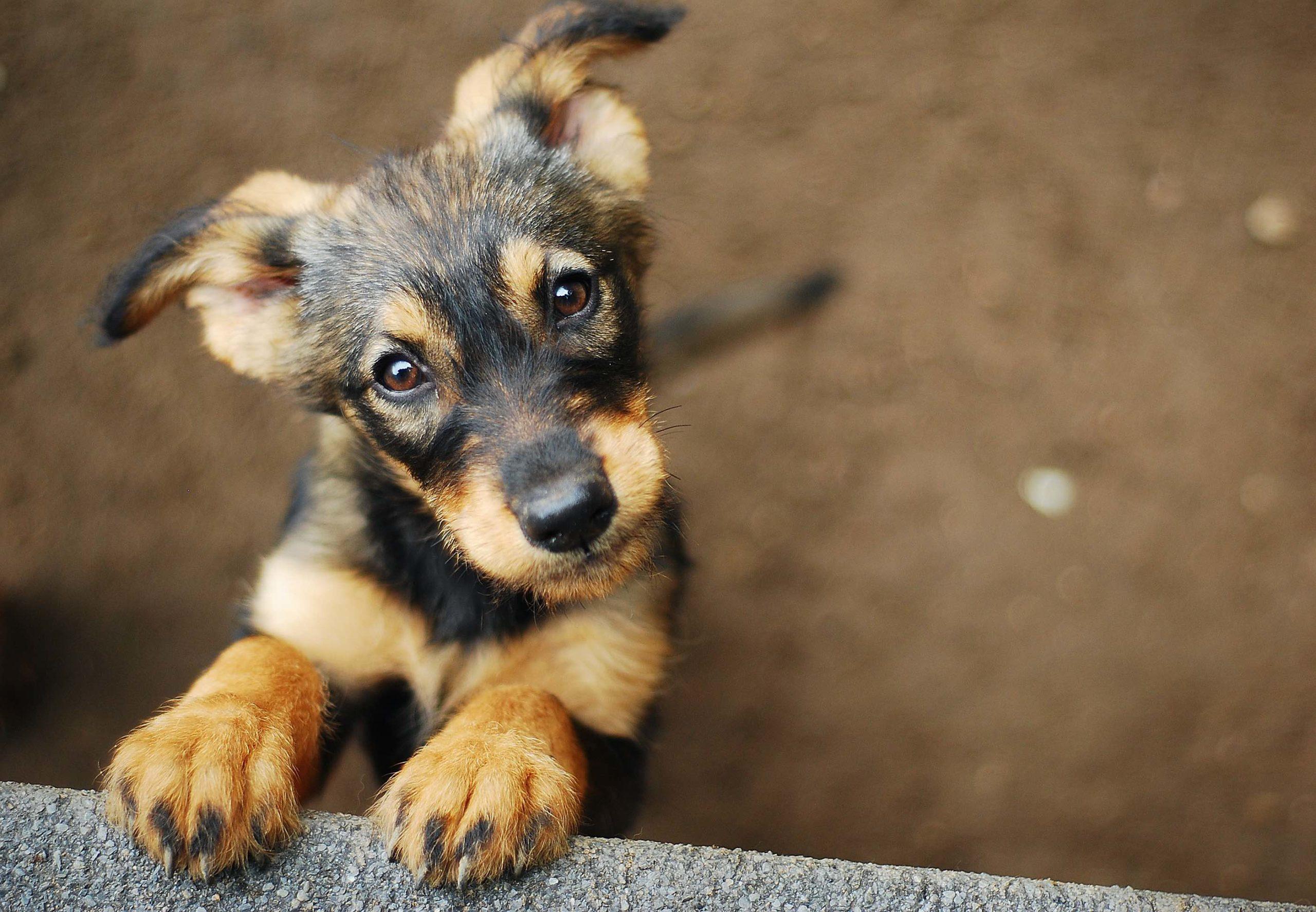 Le chien : le meilleur ami de la santé de l'homme !